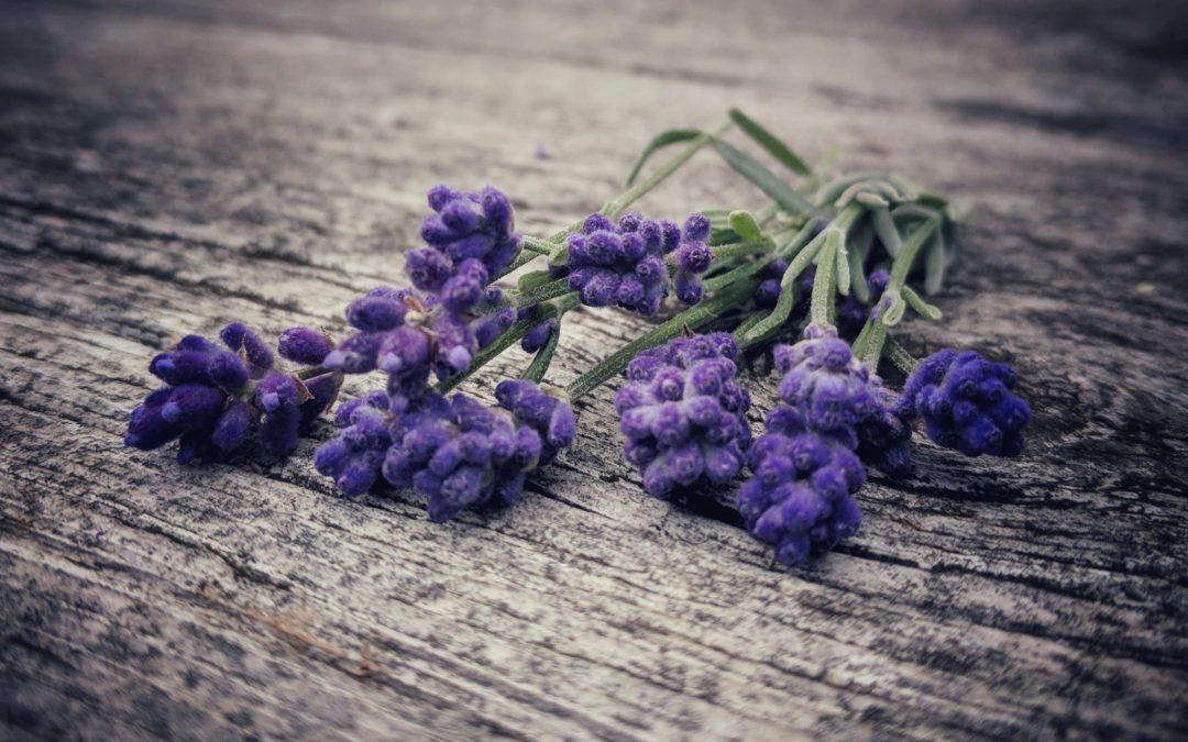 Lavendeluttrekk